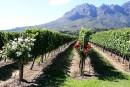 Cinq vins sud-africains à découvrir