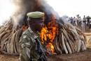 Mobilisation pour sauver les derniers éléphants d'Afrique