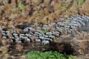 RDC: 30 éléphants abattus dans le parc de la Garamba