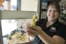 Louer un animal à Pâques ou l'adopter pour la vie?