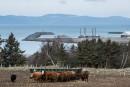 Port pétrolier: TransCanada vise un autre site sur le Saint-Laurent