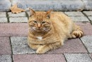 Des micropuces pour tous les chats de Québec?