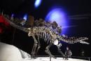 La forme des plaques sur le dos des stégosaures distinguait mâles et femelles