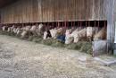 Relève agricole: «on est un peu fous!»