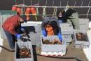 Homard gaspésien: un crustacé «unique au monde»