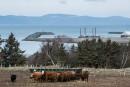 Terminal pétrolier au Québec: TransCanada ne se décidera qu'en fin d'année