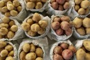 Enquête sur deux nouveaux cas d'altération de pommes de terre
