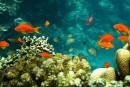 La biodiversité marine va changer