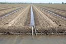 Californie: nouvelles restrictions d'eau pour les agriculteurs
