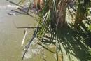 Algues bleues: attention aux biberons