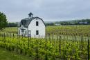 Niagara-les-vins