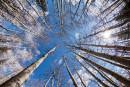 Crise forestière: dialogue de sourds entre Québec et l'industrie