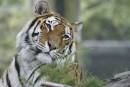 Nouvelles applications développées : le Zoo prend un virage numérique