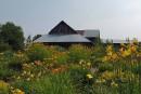 Dernière floraison pour les Jardins d'Emmarocalles