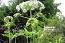 Plante sous surveillance