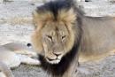 Zimbabwe: un 2<sup>e</sup> Américain impliqué dans la chasse illégale