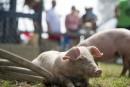 Donald Martel: les organisateurs ont à coeur le bien-être animal