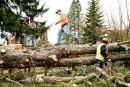 Crise forestière sur la Côte-Nord: éternel recommencement