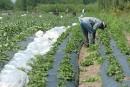 Travailleur guatémaltèque accusé: un cas isolé, selon l'organisme FERME