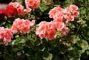 Des boutures pour vos jardins