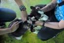 La vétérinaire répond: un, deux... cinq vaccins?