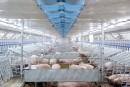 DuBreton investit 30 millions pour l'élevage sans cruauté
