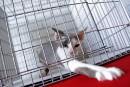 10 millions $ d'écart entre deux soumissions pour la gestion animalière à Québec