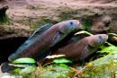 Plus de 200 espèces découvertes dans l'Himalaya