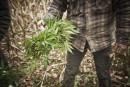 La SQ arrête quatre hommes en pleine récolte de plants de cannabis