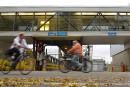 Grève des traversiers: négociations rompues