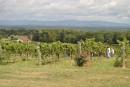 Des vignobles à découvrir en Caroline-du-Nord