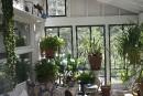 Préparez vos plantes d'intérieur pour l'hiver