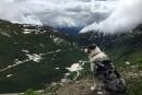 Voyager: jamais sans mon chien