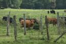 Il n'y a pas de raison de cesser de manger de la viande, disent les éleveurs