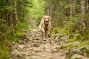 Le Québec s'ouvre lentement aux chiens
