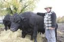 Déclin de la production bovine