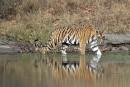 Inde: au royaume du tigre