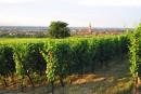 Les viticulteurs du Midi s'invitent dans la campagne présidentielle