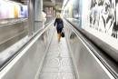 La vie reprend son cours à Bruxelles après quatre jours de paralysie
