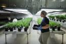 L'Ontario favorable à la vente de cannabis par la LCBO