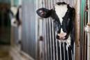 Le Québec perd plus de 250 fermes laitières