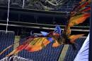 Première de <em>Toruk</em> du Cirque du Soleil: les Na'vi se préparent