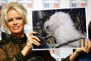 Gavage des oies: Pamela Anderson appelée en renfort