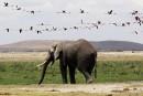 Tanzanie: des braconniers d'éléphants tuent un pilote britannique