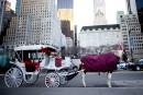 L'accord sur les calèches de Central Park implose