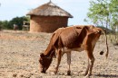 L'Afrique australe menacée d'insécurité alimentaire par El Niño