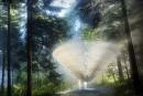 Les nouvelles créations des Jardins de Métis