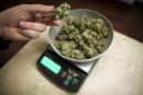 Cannabis médical: patience, prône le milieu pharmaceutique au Québec