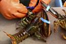 Zizanie chez les pêcheurs de homards