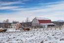 La nouvelle maison de ferme